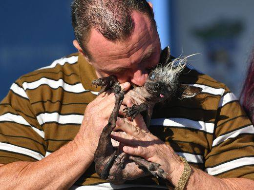 Worlds Ugliest Dog is Pretty Cute